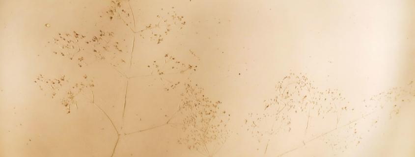 Mineralische Wandbeschichtungen (Edelputz)